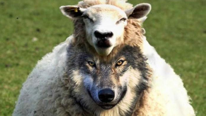 """São as JW """"falsos profetas""""?"""
